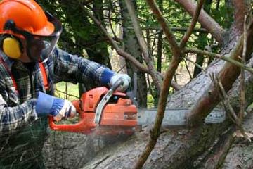 Logging & Chainsaw Safety